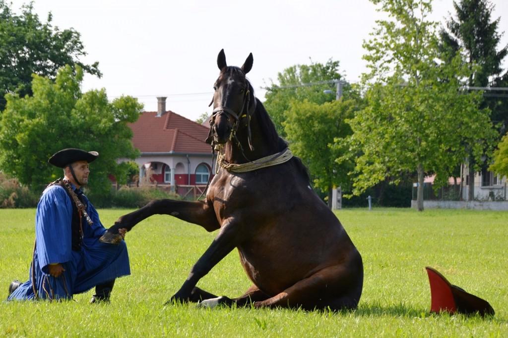 Paarden in Hongarije